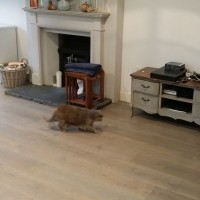 Supply and Fit Distressed Engineered Oak 2
